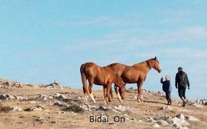 bufones de prias en autocaravana, asturias BidaiOn