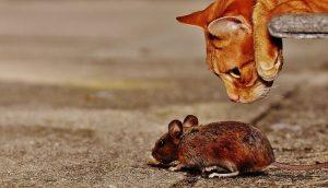ratones en la autocaravana bidaiOn